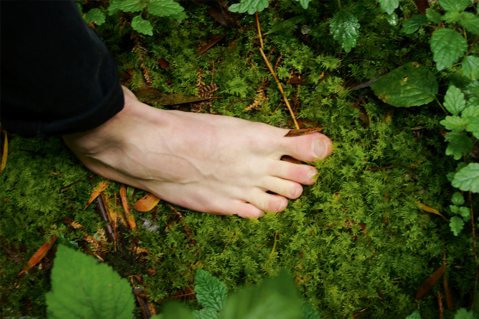 Forest bathing and finding natures pace