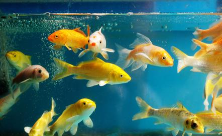 Fish in the fish tank