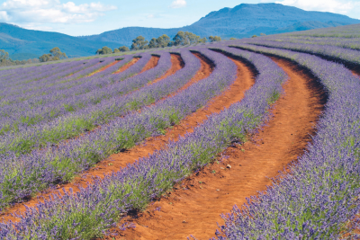 best flower farms australia